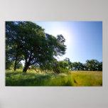 Oak Tree in Meadow, Spring Poster