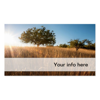 Oak tree in sunny golden meadow Double-Sided standard business cards (Pack of 100)