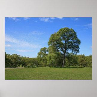 Oak Tree & Meadow Landscape Photo Poster