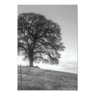 Oak Tree On A Hill Card