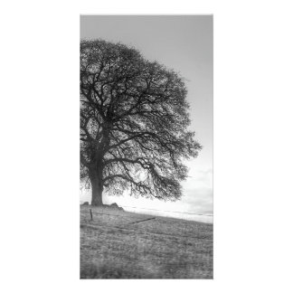 Oak Tree On A Hill Picture Card