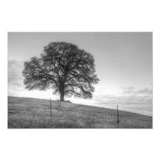 Oak Tree On A Hill Photo Print