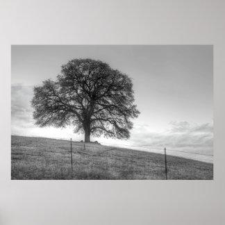 Oak Tree On A Hill Poster