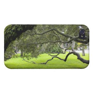 Oak Tree on St. Simons Island iPhone 4/4S Covers