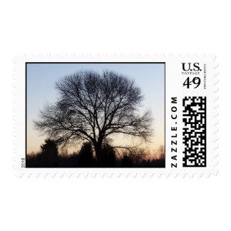 Oak Tree Postage
