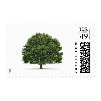 Oak Tree Postage Stamp