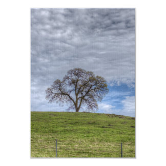 Oak Tree Solitaire Card