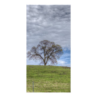 Oak Tree Solitaire Photo Greeting Card
