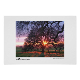 Oak Tree Sunset - Photo of the Year Finalist Poster