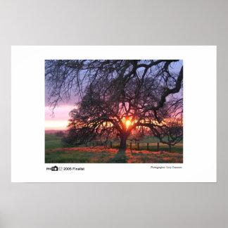 Oak Tree Sunset - Photo of the Year Finalist Poster