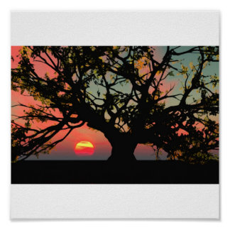 Oak Tree Sunset Poster