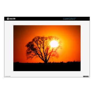 Oak Tree Sunset Laptop Decal