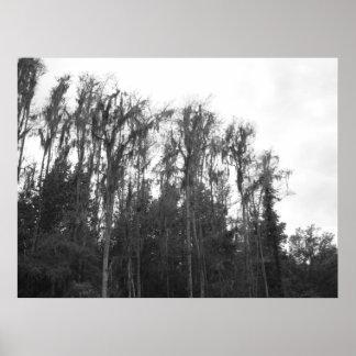 Oak Tree's 2 Poster