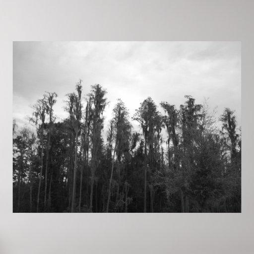 Oak Tree's 3 Poster