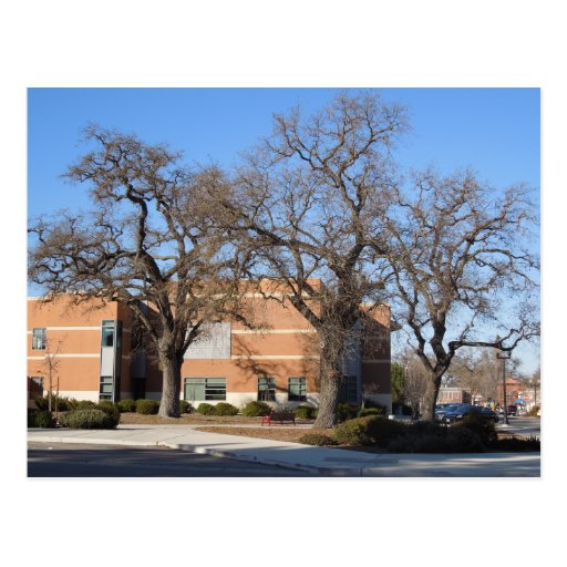 Oak Trees behind Paso Robles Superior Courthouse Postcard