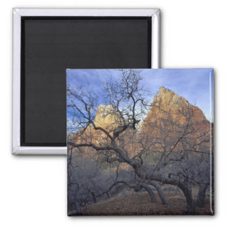 Oak trees in winter, Court of the Patriarchs 2 Inch Square Magnet