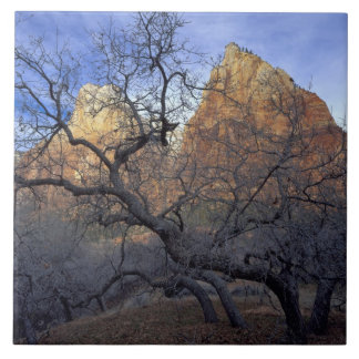 Oak trees in winter, Court of the Patriarchs Ceramic Tile