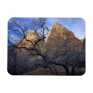 Oak trees in winter, Court of the Patriarchs Rectangular Photo Magnet