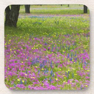 Oak Trees with field of Phlox, Blue Bonnets Coaster