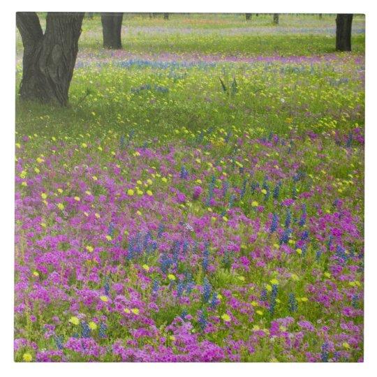 Oak Trees with field of Phlox, Blue Bonnets Tile