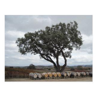 Oak with Wine Barrels, Doce Robles Postcard