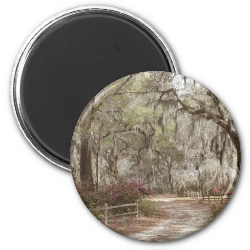 Oaks and Spanish Moss Refrigerator Magnet