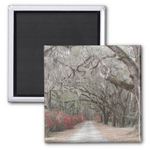Oaks and Spanish Moss Magnets