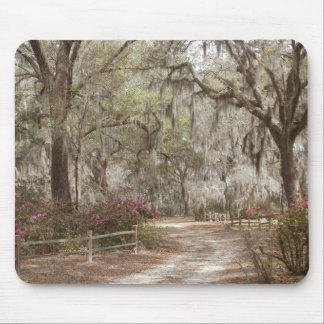 Oaks and Spanish Moss Mouse Pad
