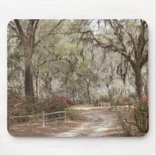 Oaks and Spanish Moss Mouse Pads