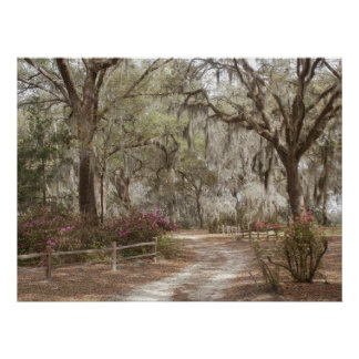 Oaks and Spanish Moss Poster