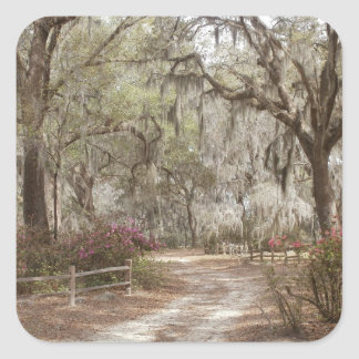 Oaks and Spanish Moss Square Sticker