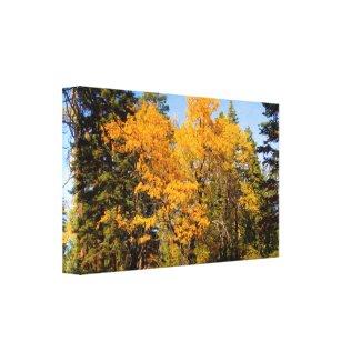 Oaks in Fall wrappedcanvas