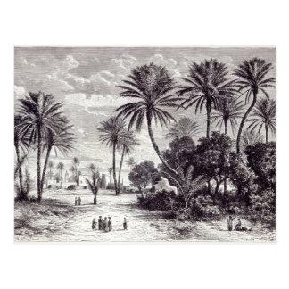 Oasis of Gafsa Tunis Post Card