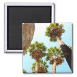 Oasis Palms at Joshua Tree National Park 2 Inch Square Magnet