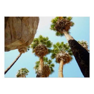 Oasis Palms at Joshua Tree National Park Poster