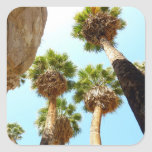 Oasis Palms at Joshua Tree National Park Square Sticker