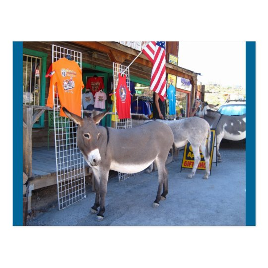 Oatman, Arizona Postcard