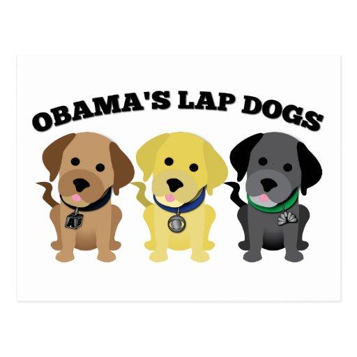 Obama Lap Dogs - The Mainstream Media Postcard