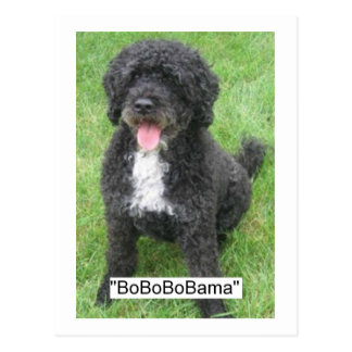 Obama Pet/Portuguese Water Dog Postcard