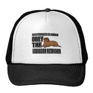 Obedezca al labrador retriever gorra