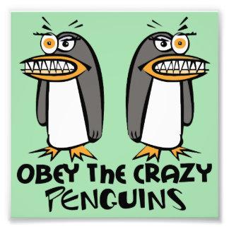 Obedezca el diseño gráfico de los pingüinos locos fotos