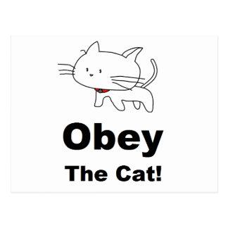 Obedezca el gato tarjetas postales
