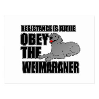 Obedezca el Weimaraner Postales