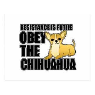 Obedezca la chihuahua tarjeta postal