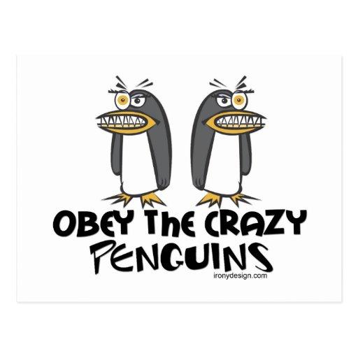 ¡Obedezca los pingüinos locos! Tarjeta Postal