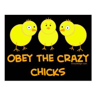 Obedezca los polluelos locos tarjeta postal
