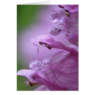 Obedience Plant Stationery Note Card
