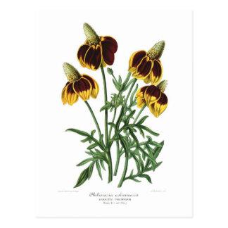 Obeliscaria columnaris (Rudbeckia) Post Card