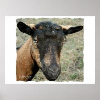 Oberhasli brown goat head shot in color print
