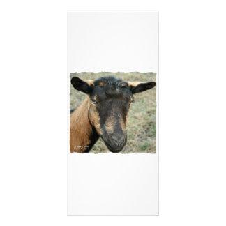 Oberhasli brown goat head shot in color rack card